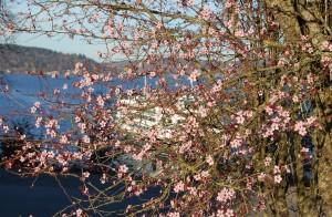 Vashon Island Ferry landing Tacoma side